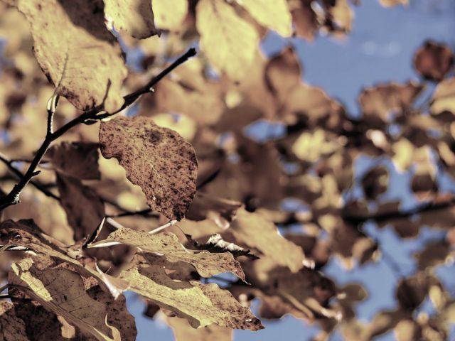 Literackie nagrody jesieni